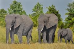 Vier olifanten