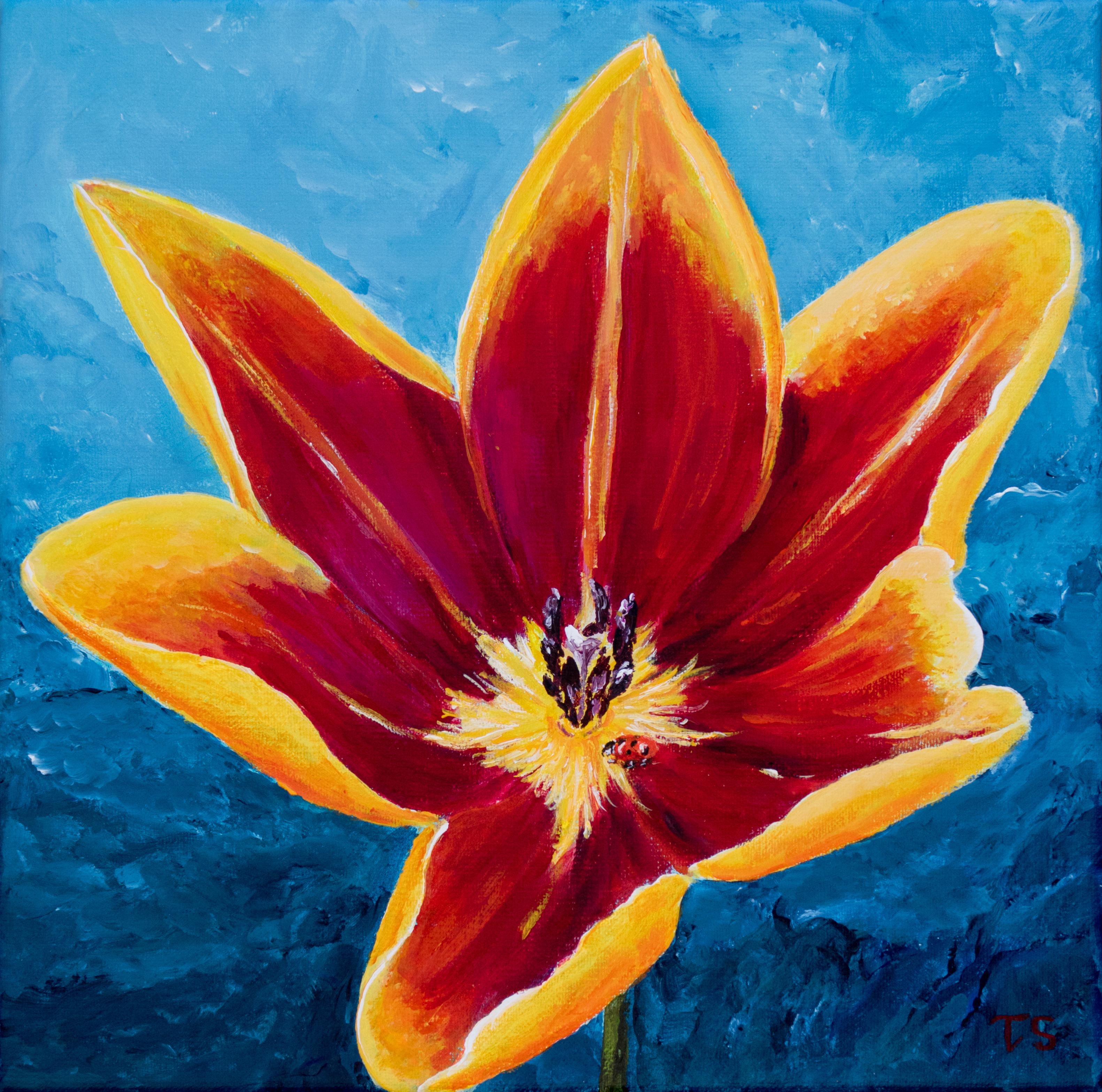 Open tulp met lieveheersbeestje 30 x 30  95,-