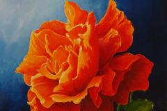 Open roos (rood-oranje geel) blauwe achtergrond 40x40  115,-